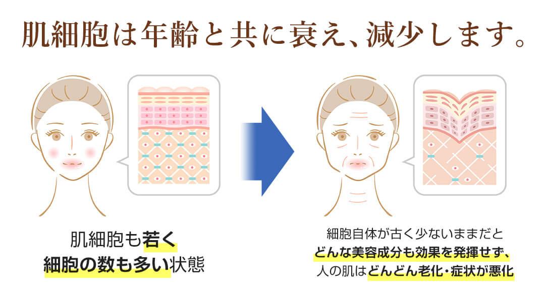 肌細胞は年齢と共に衰え、減少します。
